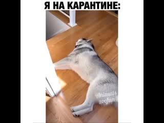 Никогда бы такую собаку не завел