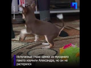 Пес в мешке: житель Бийска спас щенка, которого выбросили в мусор