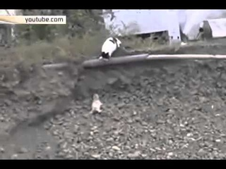 Мама-кошка спасла котенка из обрыва