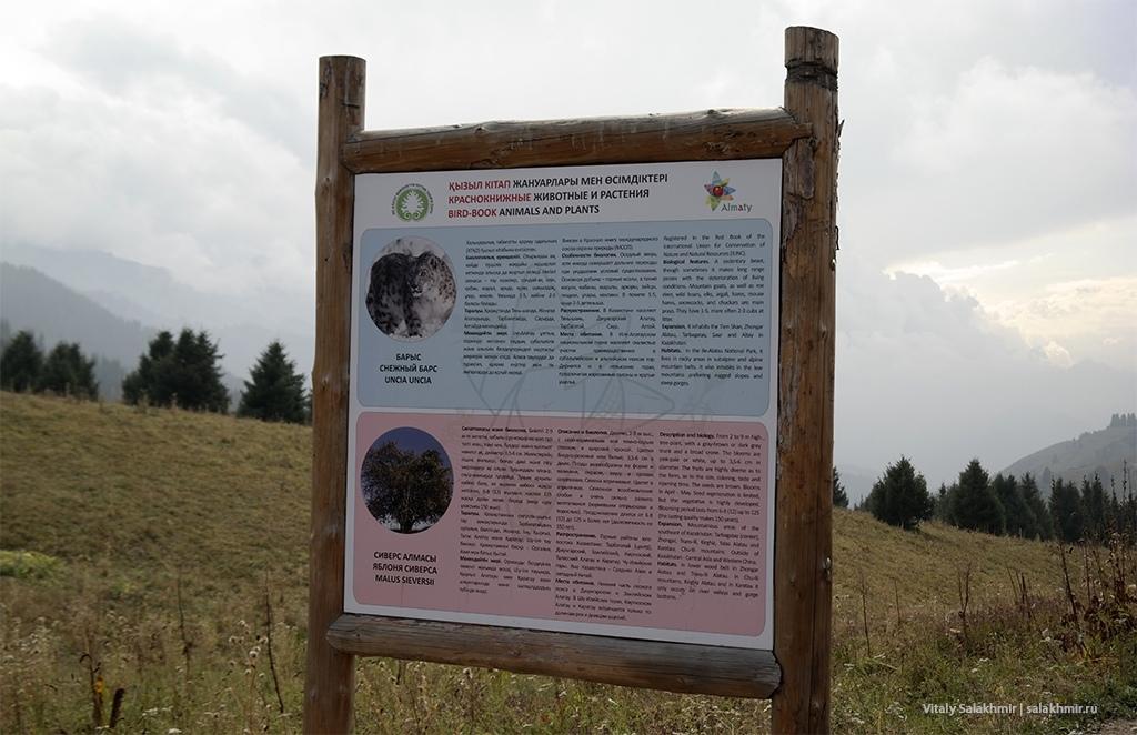 Чистый информационный стенд на Кок-Жайляу