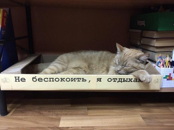 В библиотеке села Городня Тверской области работает кот Степан