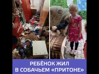 В Саратове 6-летняя девочка жила в комнате с десятком собак и кошек  Москва 24