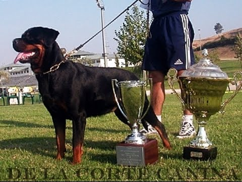 WORLD CHAMPIONS IFR Rottweilers
