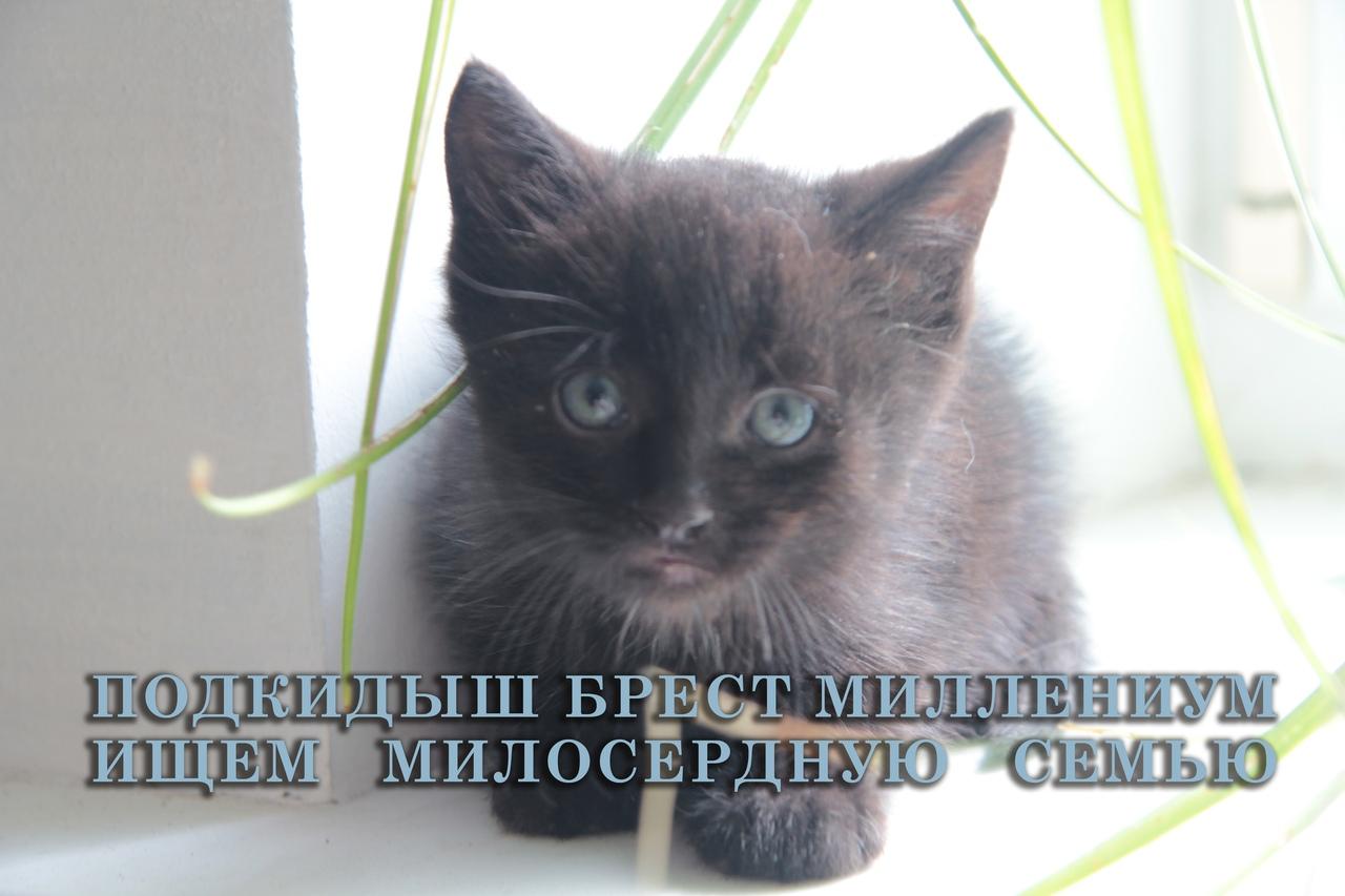 Котёнок Миля (от Миллениум) ищет своего хозяина. История чудесного спасения на Тысячелетие