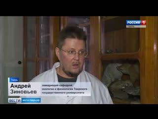 Жители Тверской области поймали в доме гигантскую крысу