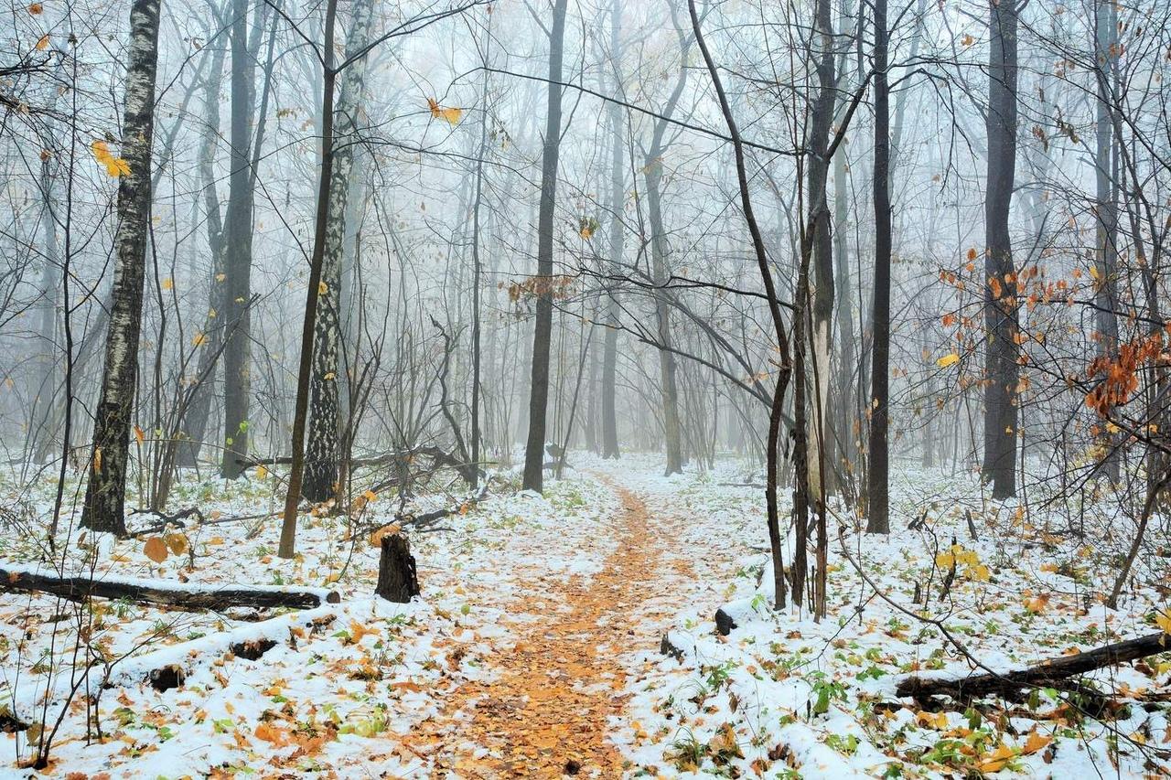 Лес в ноябре картинки