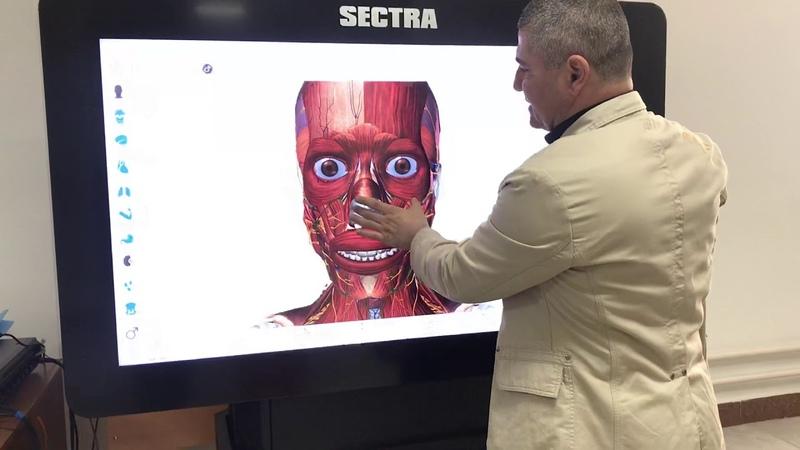 3D Анатомия жевательной и мимической мускулатуры 3D Anatomy of the chewing and facial muscles
