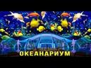 Дельфинарий ОКЕАНАРИУМ 2019 Милана едет во Владивосток на остров Русский Приморский край