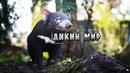 Удивительный мир, дикие животные - Тасманский дьявол. Документальный фильм. National Geographic