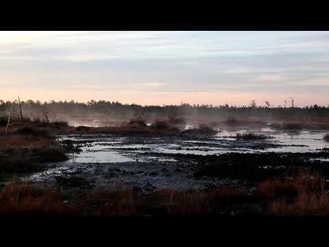 Рассвет на болоте Daysbreak