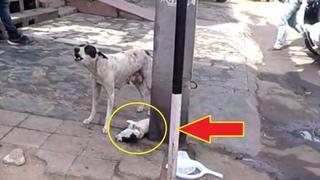 Cобака отчаянно лаяла и звала людей на помощь, ведь погибал ее щенок, невероятная история