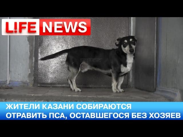 Соседи собираются отравить пса ждущего хозяев