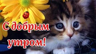 С Добрым Утром! 🌺Душа От Счастья Пусть Всегда Поёт!🌺 Музыкальная Открытка Пожелание!