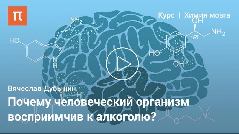 Мозг и алкоголь Вячеслав Дубынин