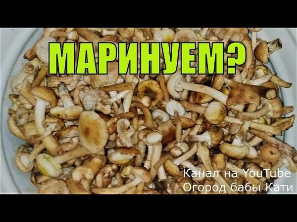 Рецепт вкусных маринованных грибов на зиму Маринованные опята Маринованные маслята
