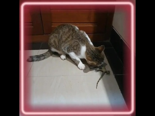 Охота на геккона... #индонезия #бали #убуд #кот #охота #геккон #ящерица #куренковы