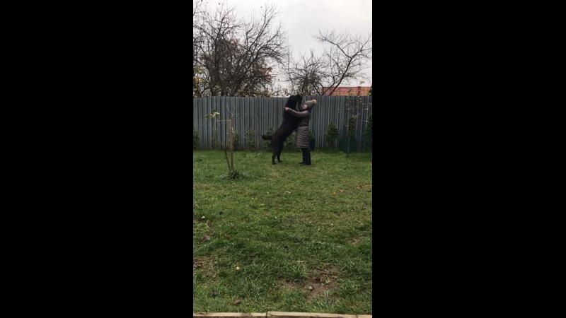 Видео от Галины Серебряковой