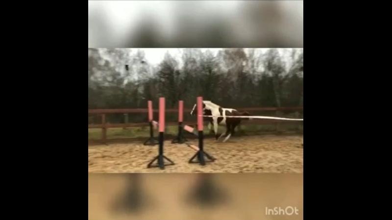 Видео от Ранчо Авенсис конюшня оленья ферма