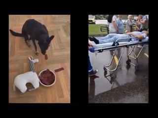Вакцинация. Кто разумнее - собака или человек?