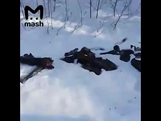 Жители Подмосковья обнаружили  кладбище ног