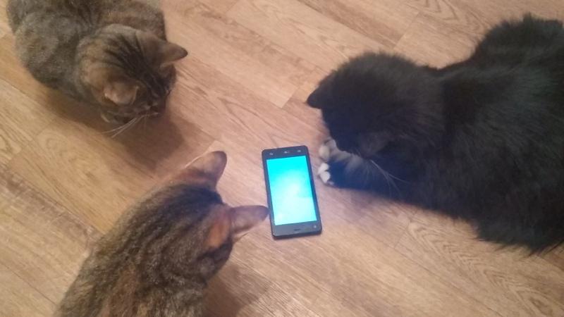 Видеоигры для кошек или Чем занять животное, пока хозяина нет дома