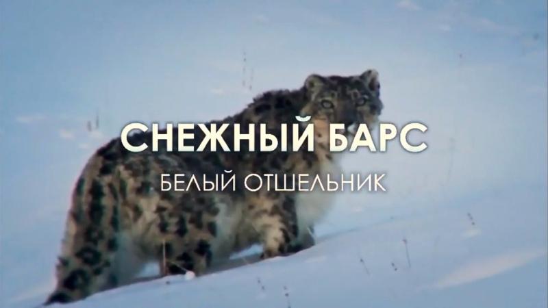 Снежный барс Белый отшельник Части 1 2