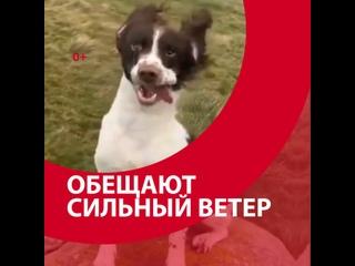 Обещают сильный ветер - Москва FM