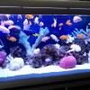 Установка и обслуживание аквариумов