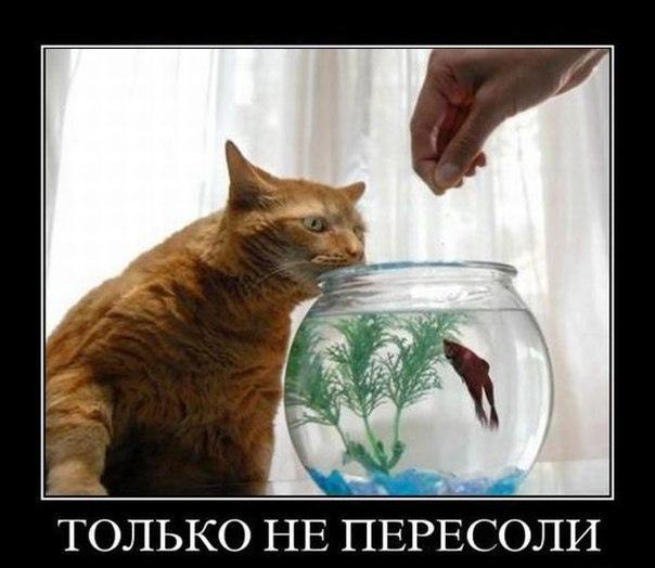 А то невкусная будет)