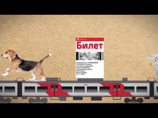 Как перевезти домашнее животное в электричке?