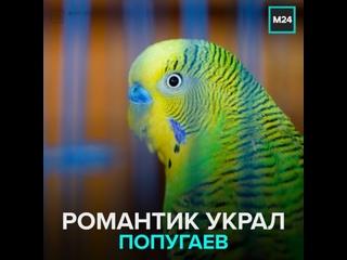 Вор украл попугая для девушки — Москва 24