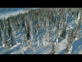 Дикая Арктика - Замерзший лес | 2 серия из 3 | 2018 | HD 1080