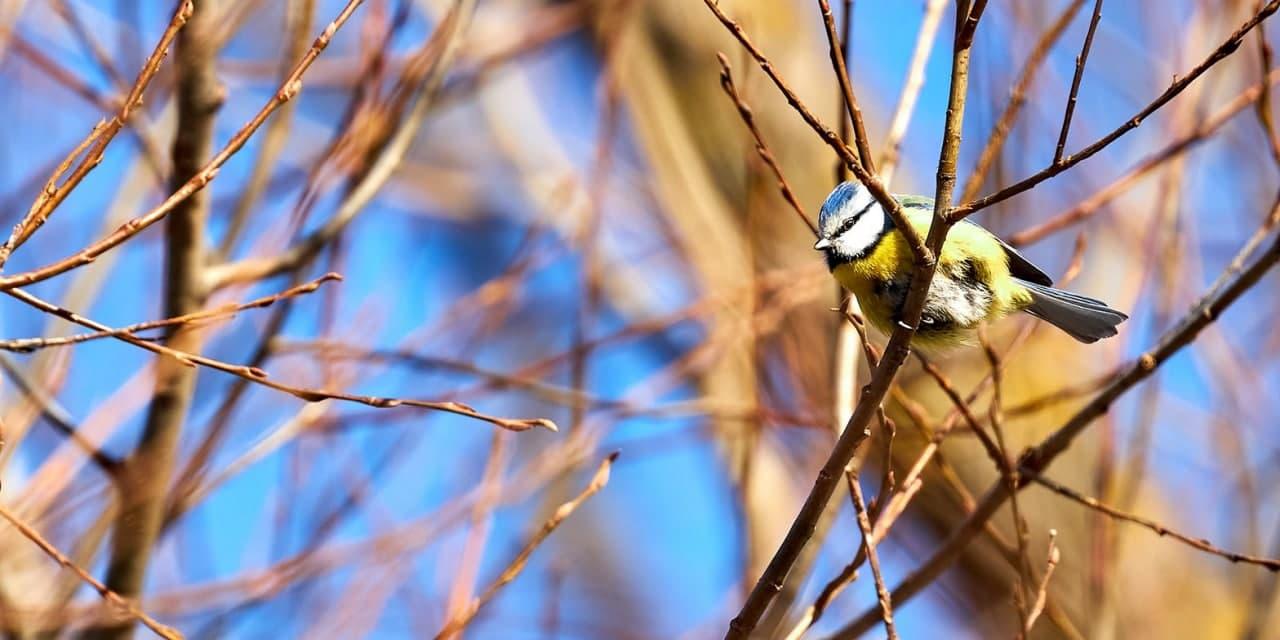 В Нижегородском отметили праздник «Зиновий-синичник». Фото: Максим Денисов. mos.ru
