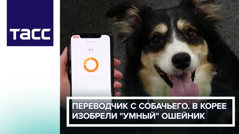Переводчик с собачьего В Корее изобрели умный ошейник