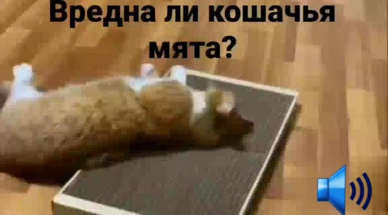Вредна ли кошачья мята.mp4