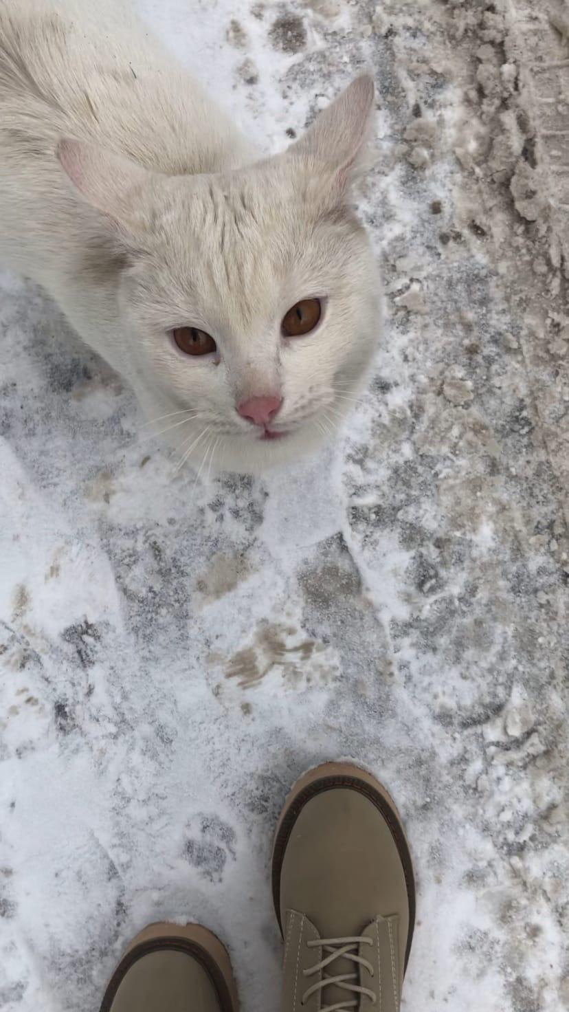 Около Кунцевской 13/6, большой высотки, круглой, около детского сада, бегает котик.