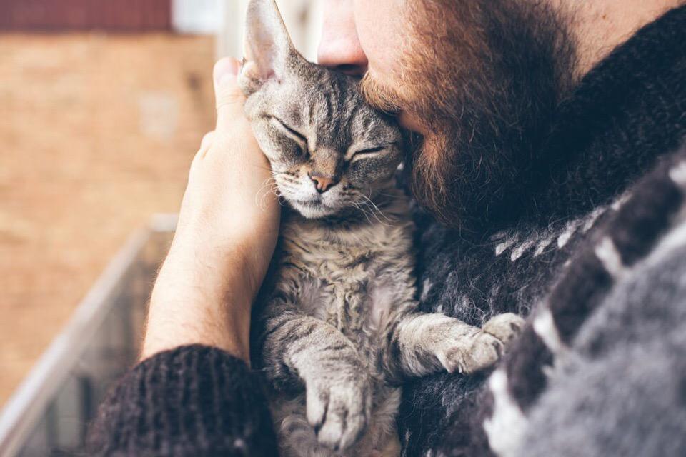 НЕ БОЛЕЙТЕ  Жена очень любила котов и собак.