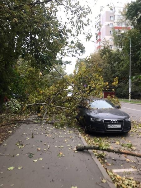 В Москве на Хромова дерево упало на машины.Будьте ...