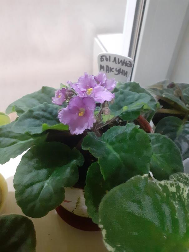 Купить молодые цветущие и | Объявления Орска и Новотроицка №18134