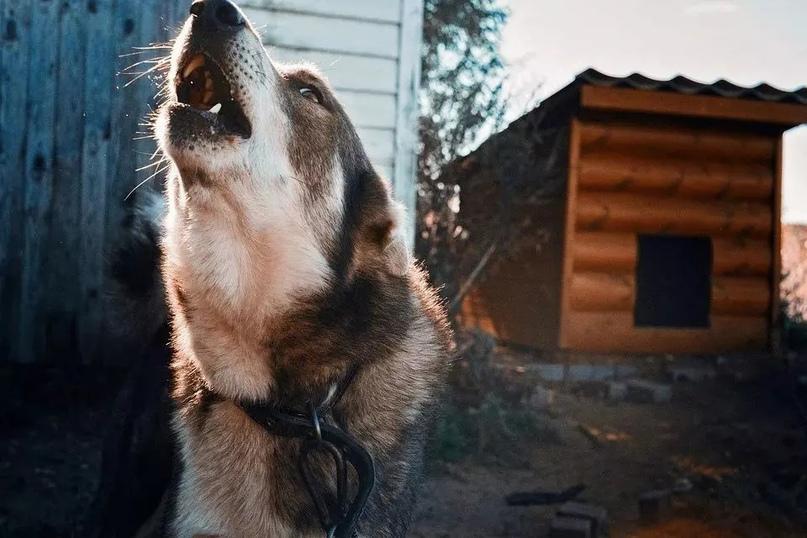 После нападения собак на ребенка в Дмитрове чиновников проверят на халатность