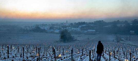 Как морозы уничтожили виноградники во Франции