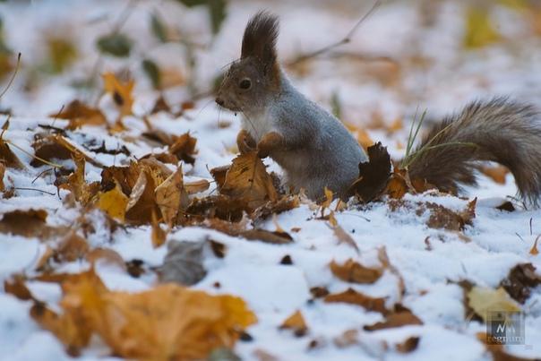 Потепление в Югре сменится снегомВ Югру вернулось ...