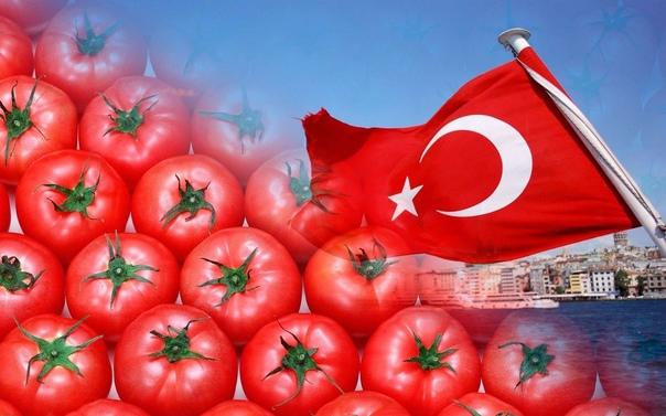 В помидорах и фруктах из Турции обнаружены вирусы ...