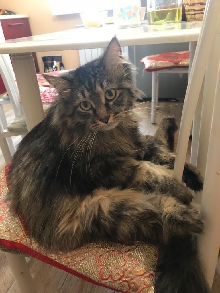 2 января потерялся кот, просьба откликнуться кто