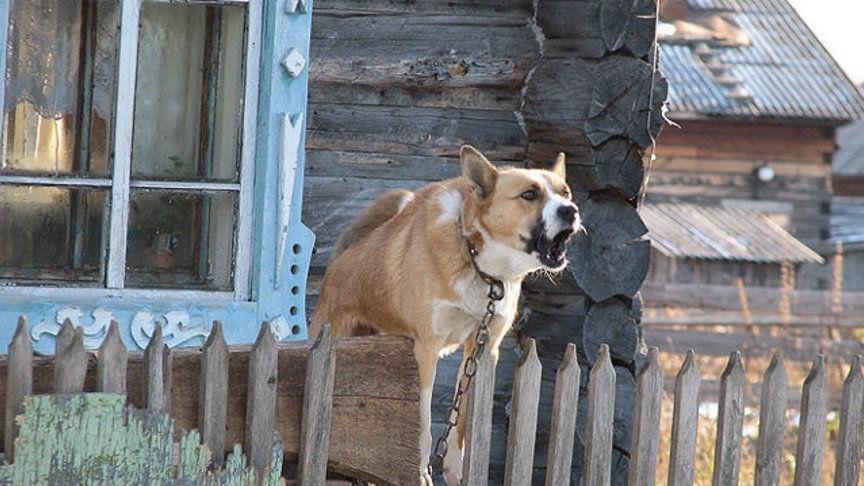 В Бурятии сторожевые собаки начали нападать на переписчиков   Алексей Цыденов попросил жителей частных домов следить... [читать продолжение]
