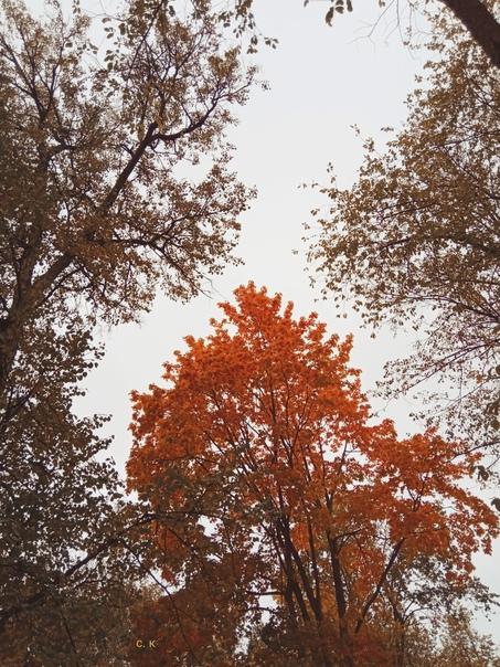 Осень загадочное время года. Природа осенью полна ...