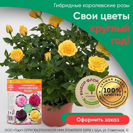 Кейс: «Королевские гибридные розы» в MyTarget!, изображение №4