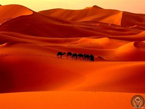 Палеонтологи: Сахара была морем, где жили гигантские сомы и морские змеи