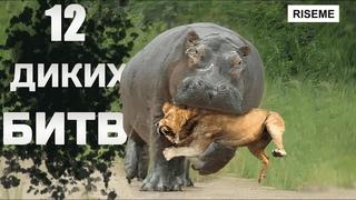 12 СУМАСШЕДШИХ Битв Животных Снятых На Камеру