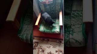 Собака ищет клад но это бессмысленно